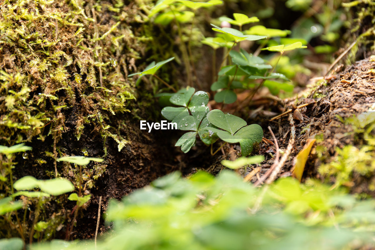 green color, plant, selective focus, growth, leaf, plant part, nature, beauty in nature, day, close-up, no people, field, beginnings, land, freshness, dirt, outdoors, vulnerability, fragility, new life
