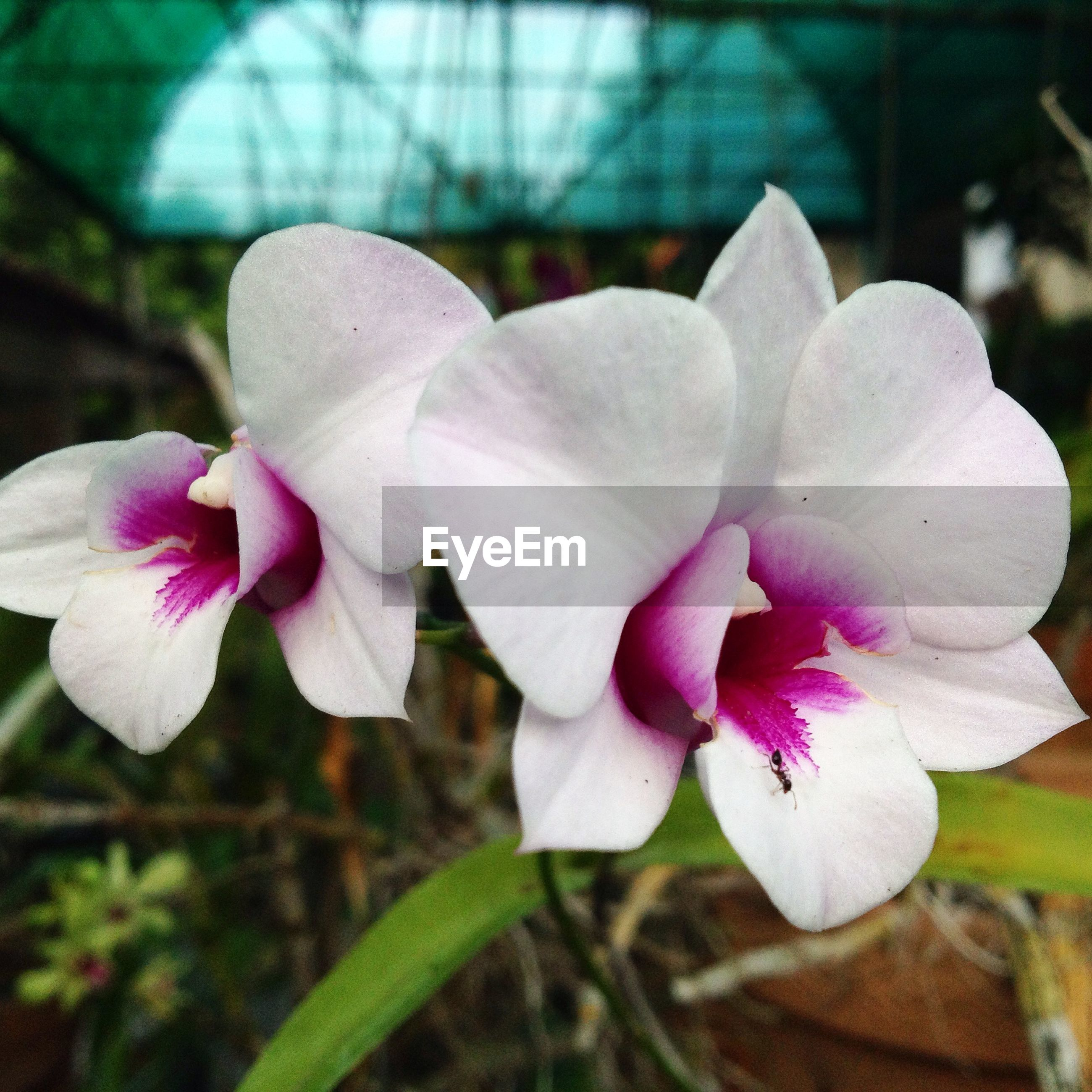 flower, petal, freshness, fragility, flower head, growth, beauty in nature, close-up, nature, blooming, pink color, focus on foreground, plant, in bloom, orchid, stamen, blossom, day, outdoors, no people