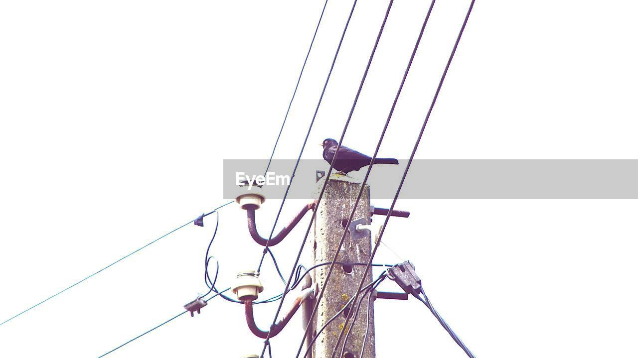 cable, low angle view, connection, clear sky, electricity, bird, perching, power line, animal themes, copy space, animals in the wild, power supply, technology, no people, outdoors, day, animal wildlife, electricity pylon, telephone line, nature, sky