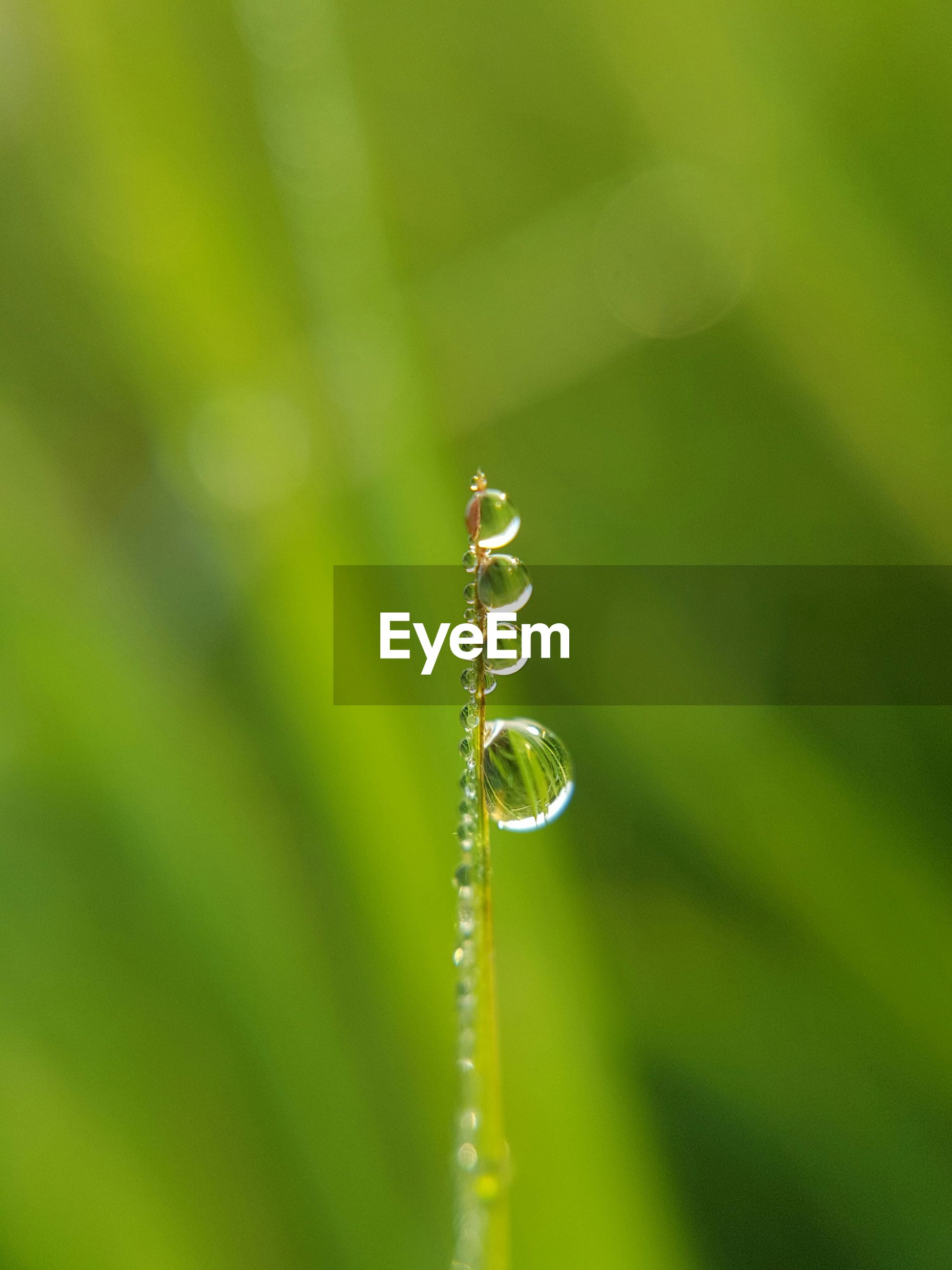 Close-up of droplets on blade of grass