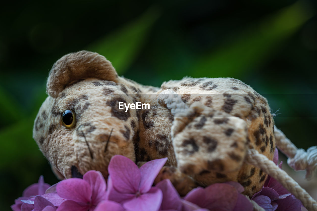 close-up, animal, animal themes, plant, flower, nature, flowering plant, animal wildlife, selective focus, focus on foreground, animals in the wild, no people, one animal, mammal, day, beauty in nature, outdoors, fragility, vulnerability, vertebrate, flower head
