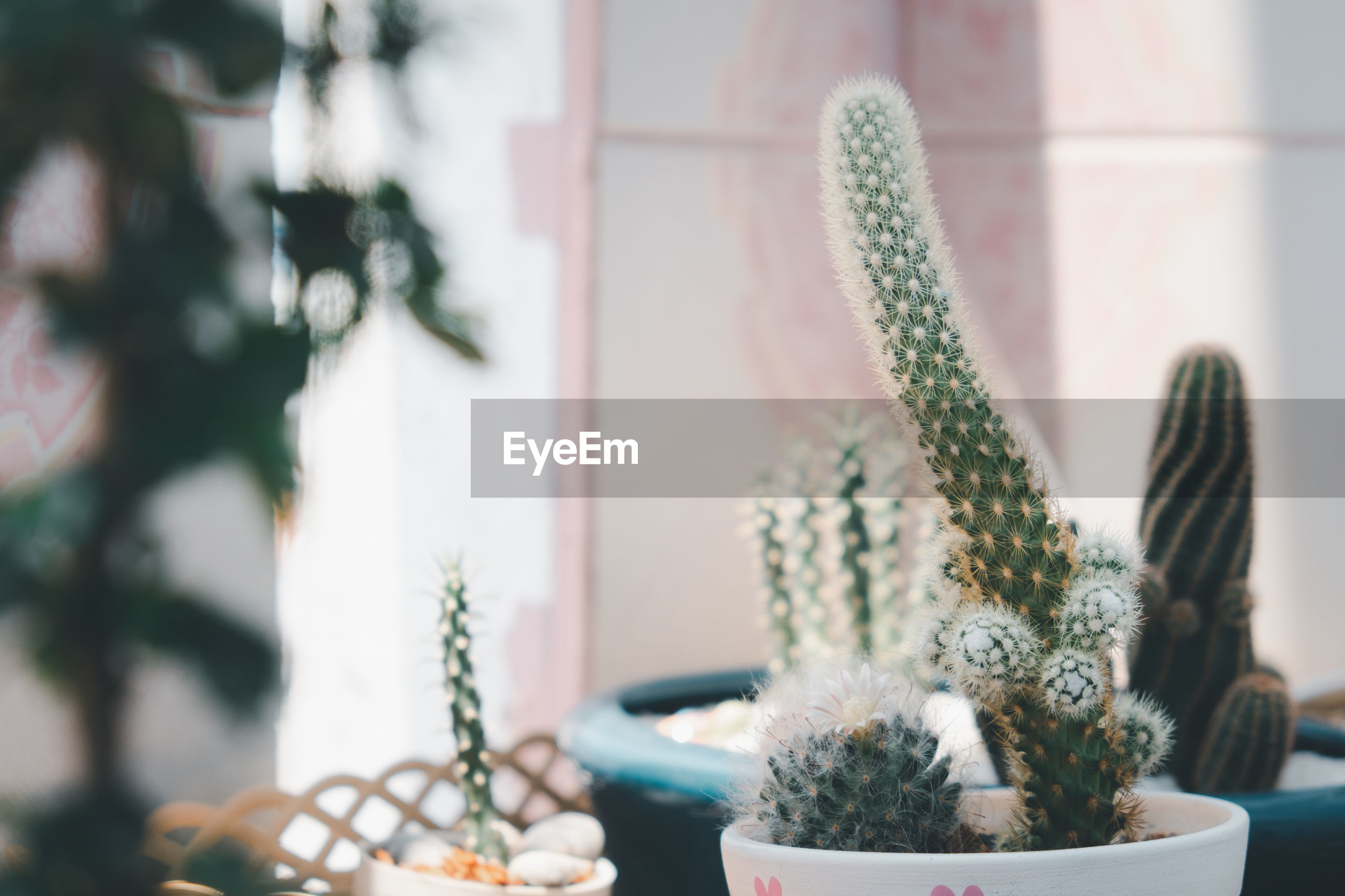 Close-up of potted cactus at home