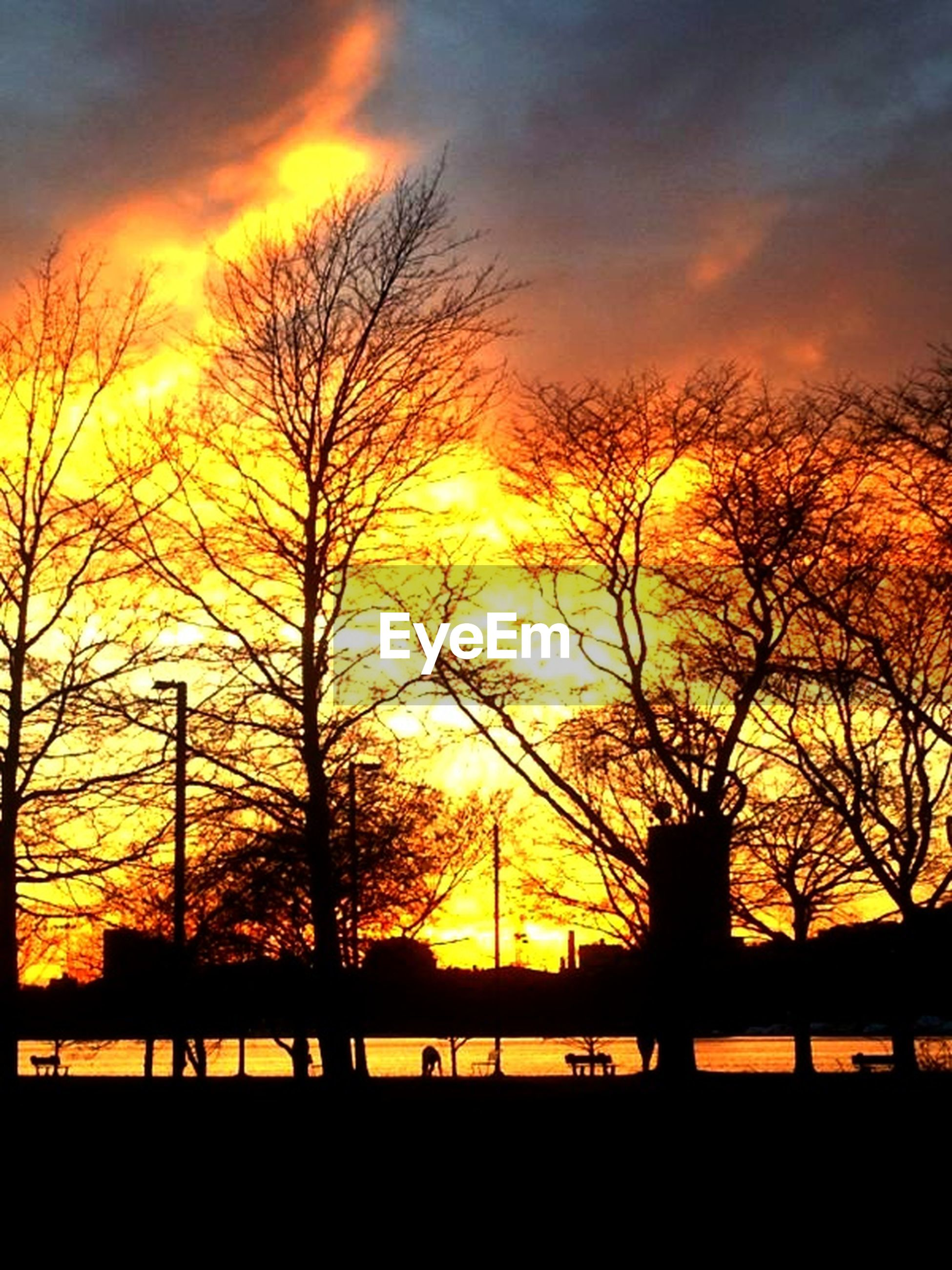 sunset, silhouette, tree, orange color, bare tree, sky, scenics, beauty in nature, tranquility, tranquil scene, water, railing, nature, branch, cloud - sky, idyllic, river, bridge - man made structure, sun, lake