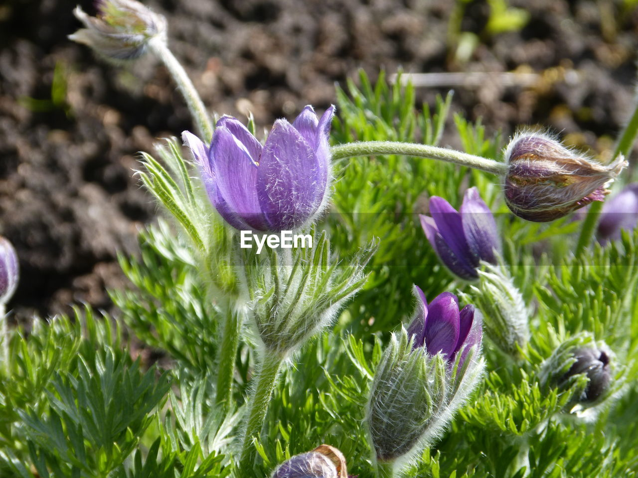 nature, purple, flower, fragility, plant, growth, beauty in nature, freshness, petal, day, no people, green color, close-up, flower head, outdoors, leaf, one animal, animal themes, crocus
