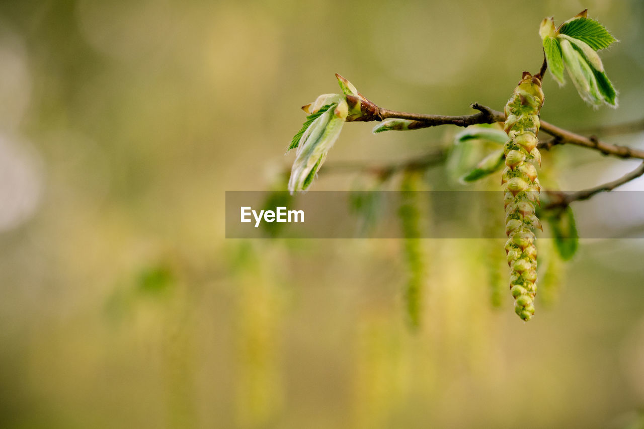 plant, growth, close-up, green color, selective focus, insect, nature, beauty in nature, no people, day, invertebrate, animal wildlife, focus on foreground, outdoors, animals in the wild, animal, animal themes, twig, plant stem, leaf