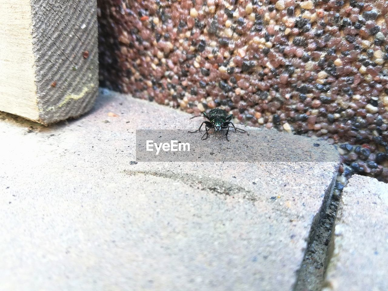 animal themes, animal wildlife, animal, animals in the wild, invertebrate, insect, one animal, day, selective focus, close-up, no people, nature, ant, outdoors, textured, high angle view, fly, zoology, housefly, concrete, marine
