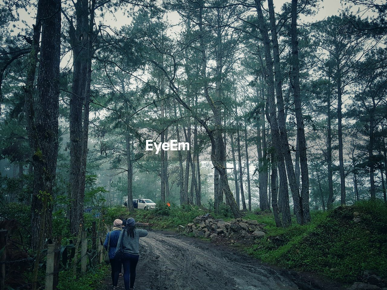 Rear view of female friends walking in forest