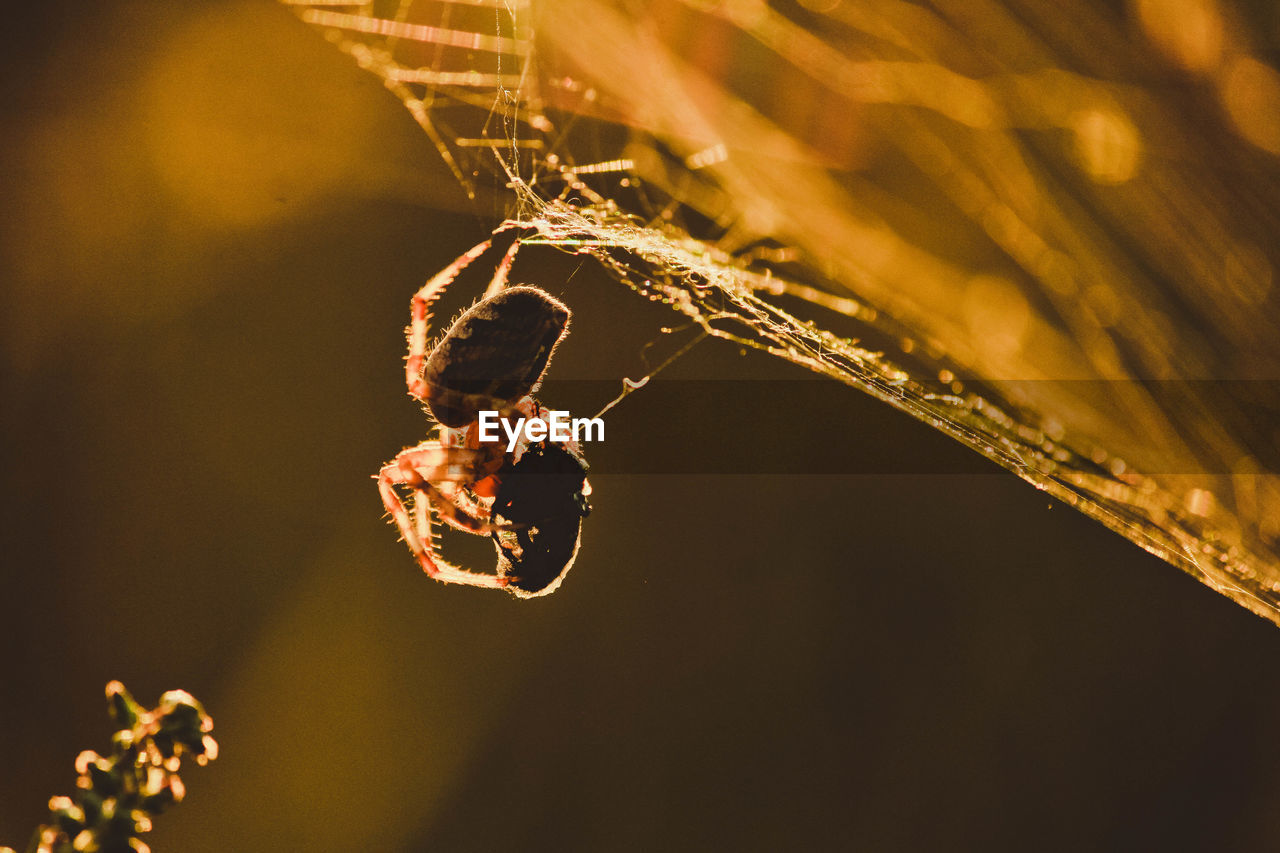 close-up, focus on foreground, invertebrate, insect, fragility, animal, animal themes, spider web, animals in the wild, spider, no people, nature, arachnid, one animal, animal wildlife, selective focus, vulnerability, plant, day, arthropod, outdoors, web