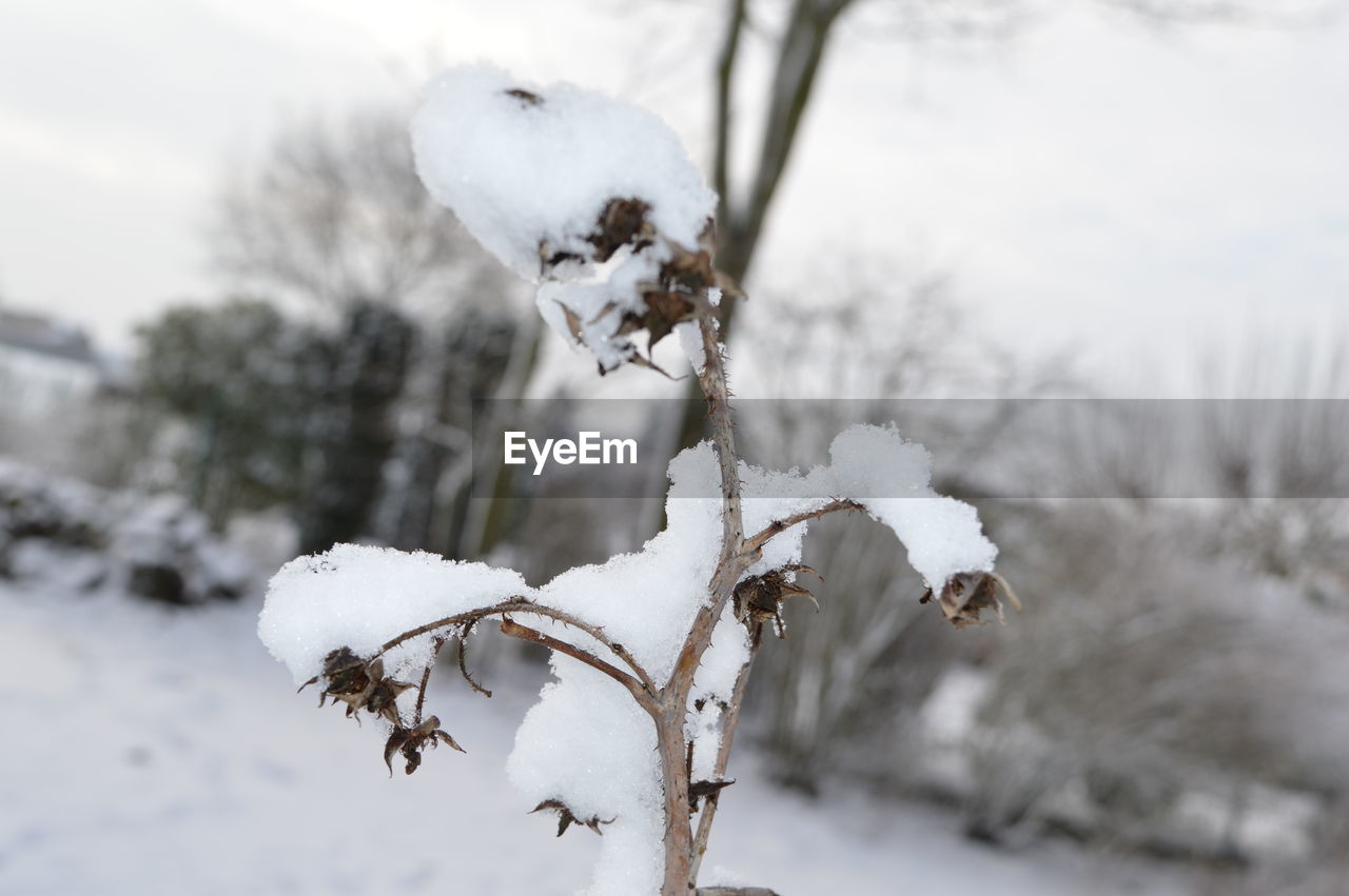 cold temperature, snow, winter, white color, frozen, focus on foreground, covering, nature, day, plant, beauty in nature, no people, close-up, tree, ice, land, outdoors, field, white, extreme weather, softness, powder snow