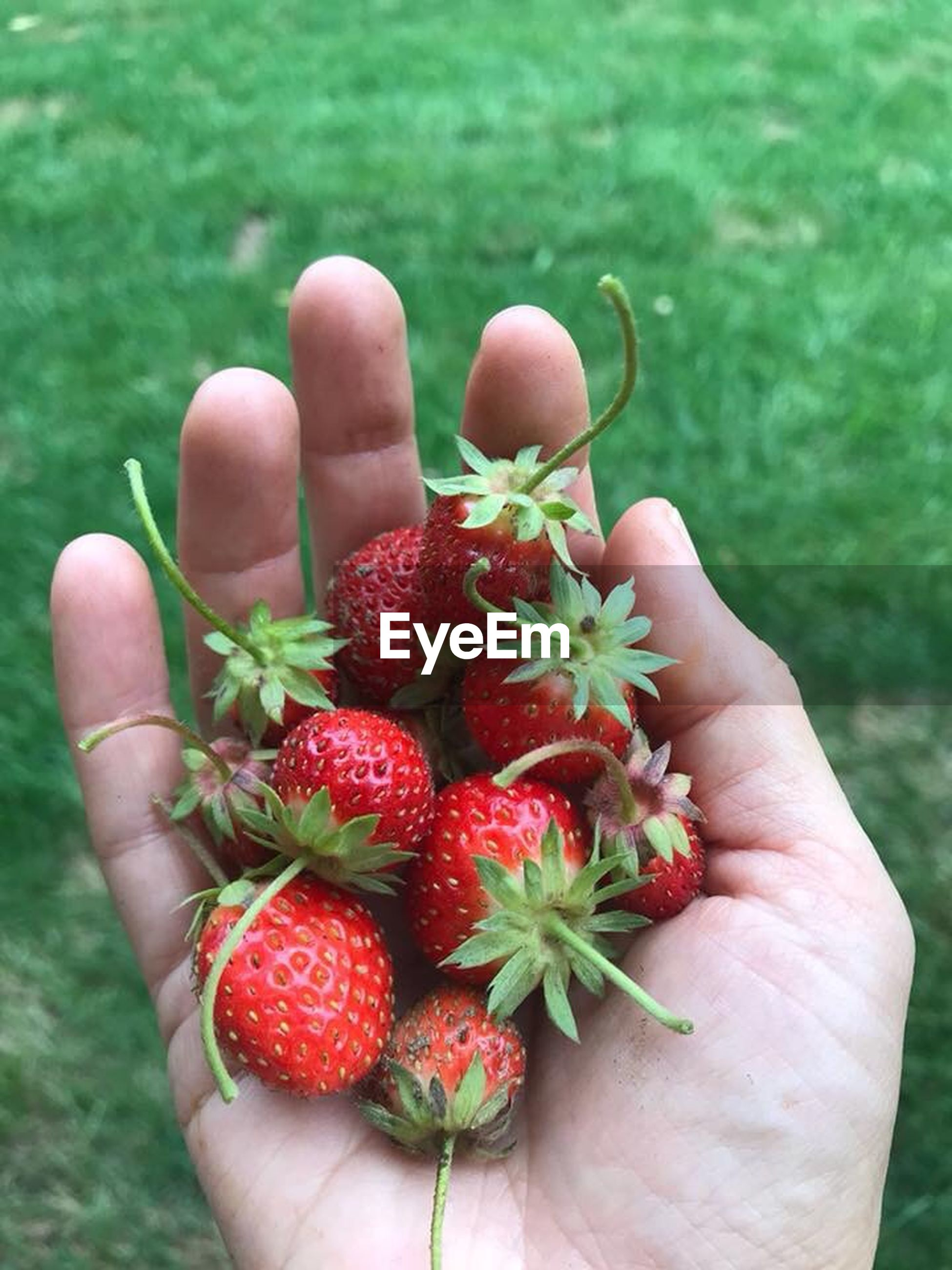 human hand, hand, one person, human body part, fruit, real people, healthy eating, holding, unrecognizable person, personal perspective, body part, berry fruit, food, food and drink, red, wellbeing, lifestyles, freshness, human finger, finger, outdoors, human limb, ripe