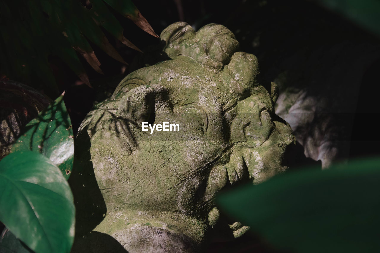 plant, leaf, plant part, close-up, no people, human representation, selective focus, sculpture, statue, representation, nature, green color, art and craft, creativity, day, growth, male likeness, craft, outdoors, tree, leaves, angel