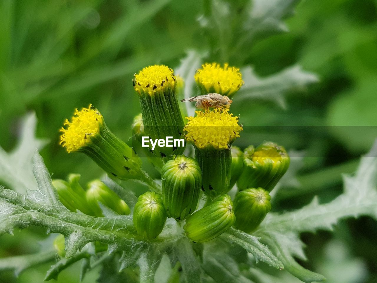 flower, flowering plant, plant, fragility, growth, vulnerability, beauty in nature, freshness, green color, yellow, flower head, close-up, inflorescence, petal, nature, no people, day, selective focus, bud, plant part, outdoors, sepal