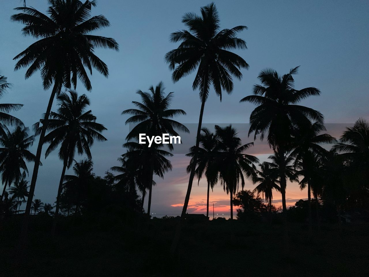 tree, silhouette, palm tree, tropical climate, sky, plant, sunset, nature, no people, tranquility, beauty in nature, tranquil scene, growth, scenics - nature, outdoors, coconut palm tree, clear sky, low angle view, night, land, dark