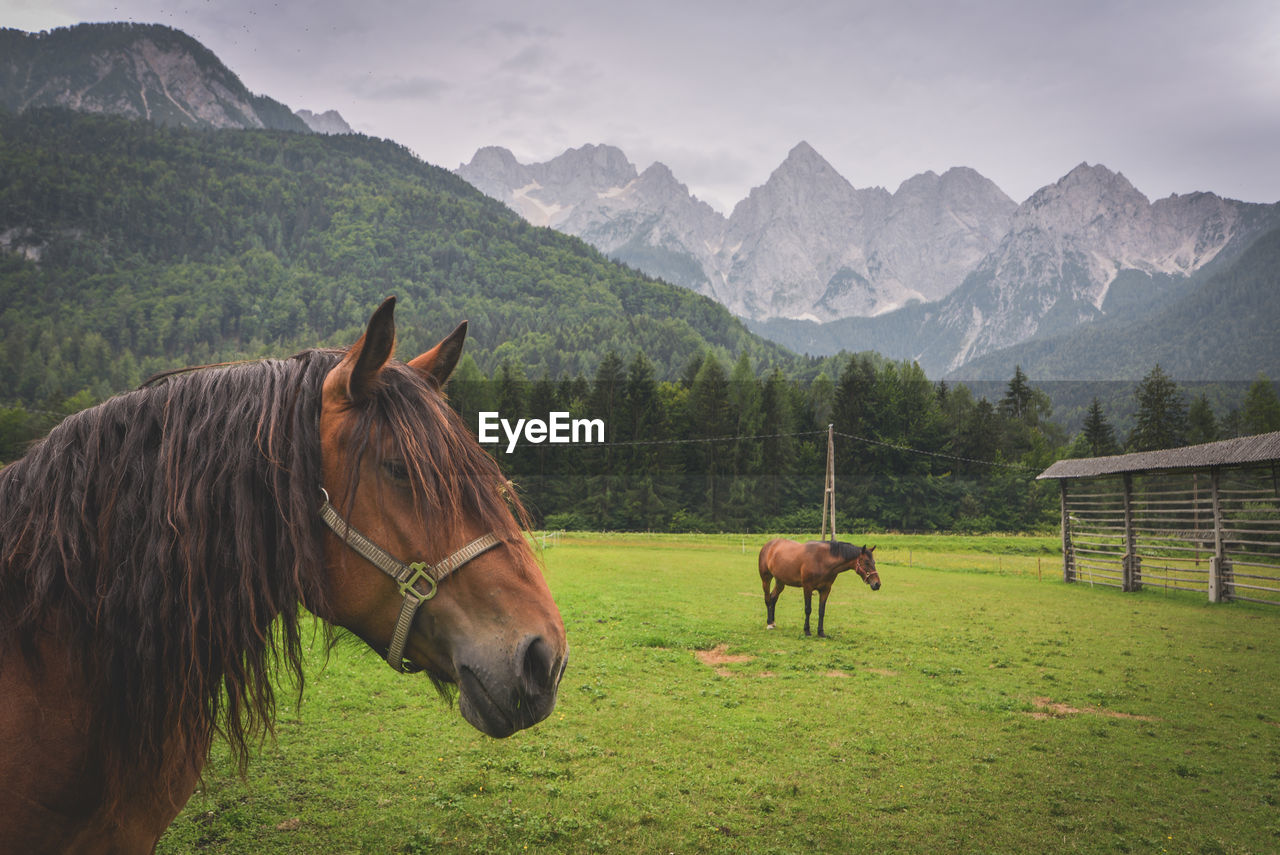 Horses On Grassy Field Against Mountains