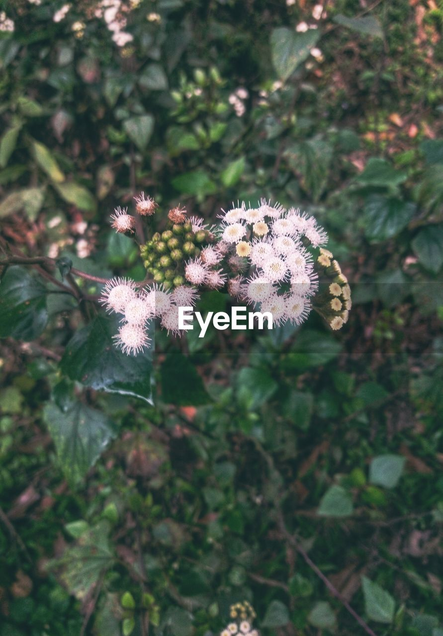 plant, flower, flowering plant, growth, beauty in nature, close-up, freshness, vulnerability, fragility, nature, day, focus on foreground, no people, land, plant part, field, leaf, flower head, high angle view, outdoors