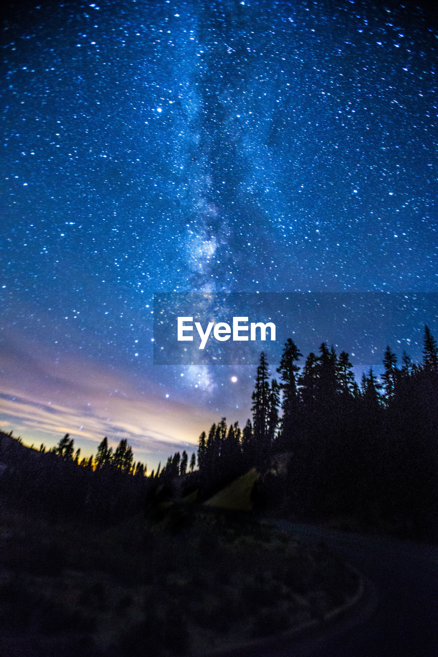 Silhouette trees on hill against milky way in starry sky at dusk