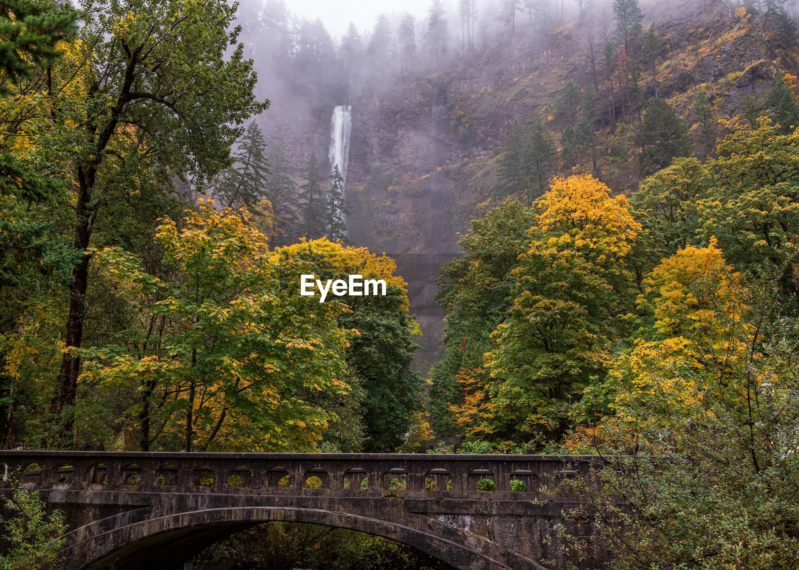 BRIDGE OVER FOREST DURING AUTUMN