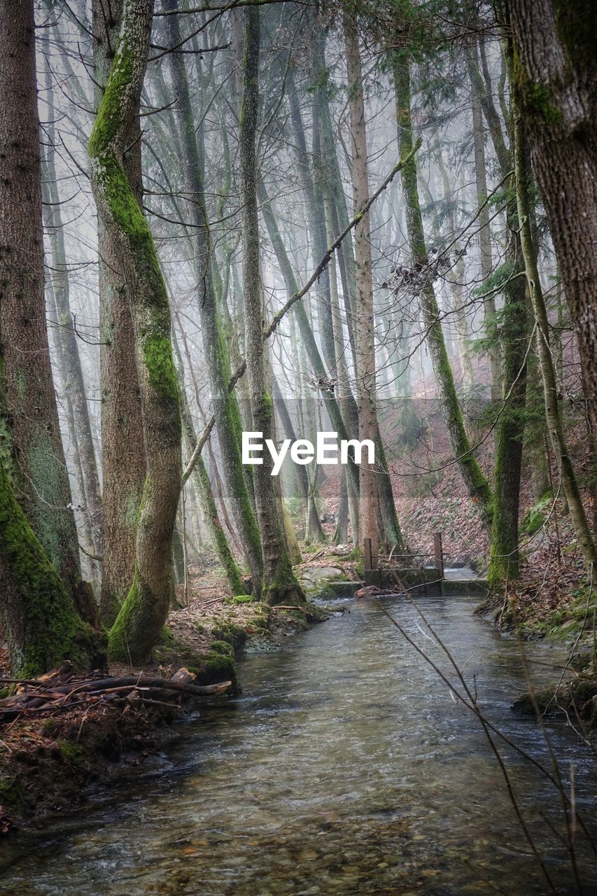 forest, tree, plant, land, tranquility, no people, woodland, tree trunk, nature, trunk, water, beauty in nature, day, tranquil scene, non-urban scene, scenics - nature, branch, growth, outdoors, flowing water