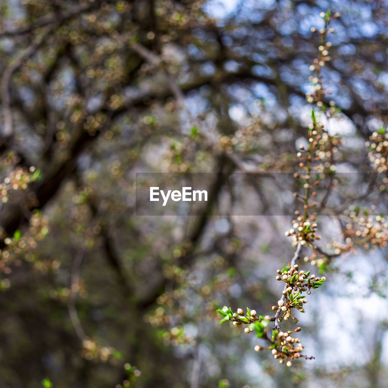 plant, tree, growth, flower, flowering plant, fragility, beauty in nature, blossom, vulnerability, nature, day, springtime, freshness, low angle view, branch, no people, focus on foreground, selective focus, tranquility, outdoors, cherry blossom, spring, cherry tree