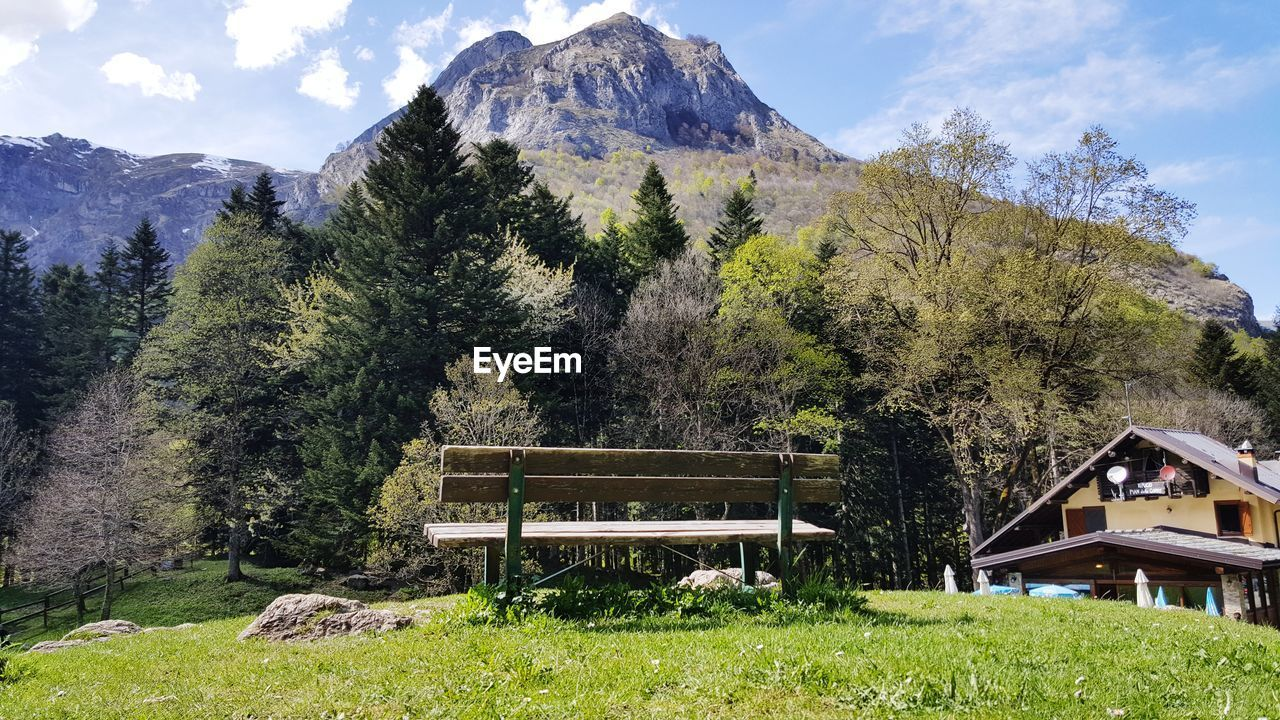 plant, tree, mountain, beauty in nature, grass, sky, nature, growth, green color, tranquility, land, scenics - nature, day, tranquil scene, seat, non-urban scene, no people, bench, field, idyllic, outdoors