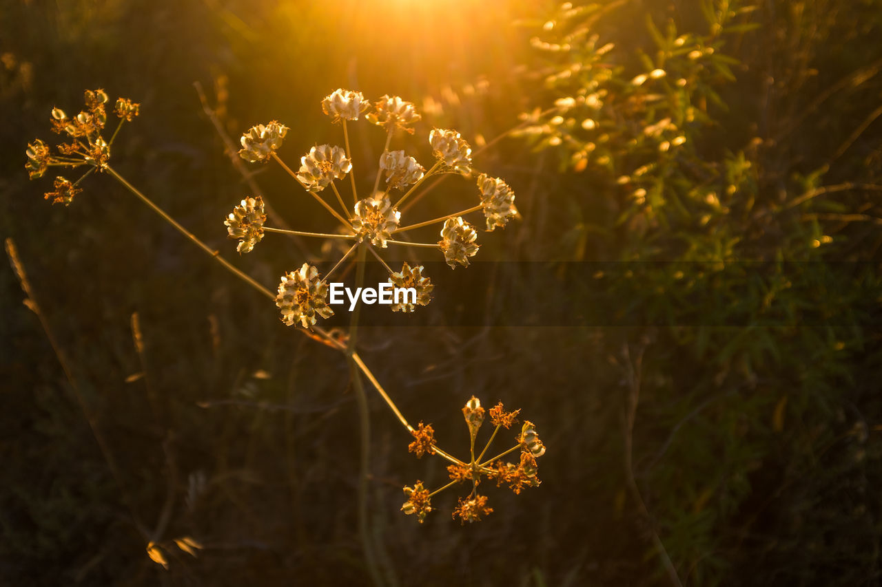 nature, flower, beauty in nature, no people, fragility, plant, outdoors, growth, night, illuminated, close-up, tree, flower head, freshness