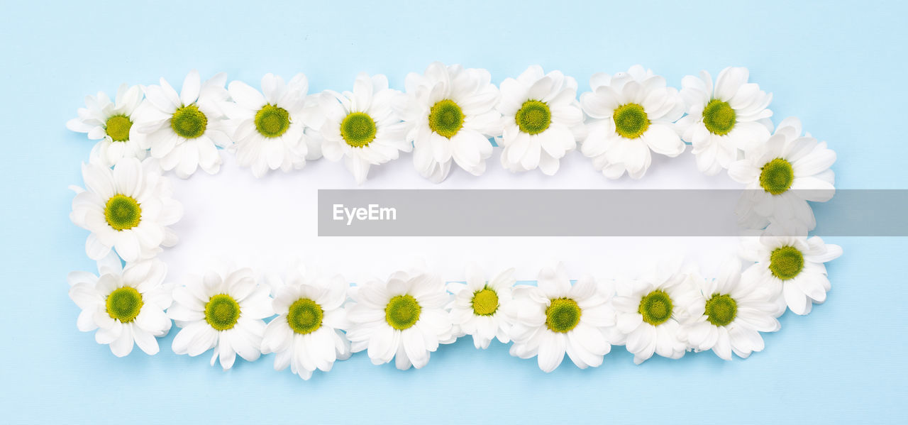 CLOSE-UP OF WHITE DAISY FLOWERS AGAINST GRAY BACKGROUND