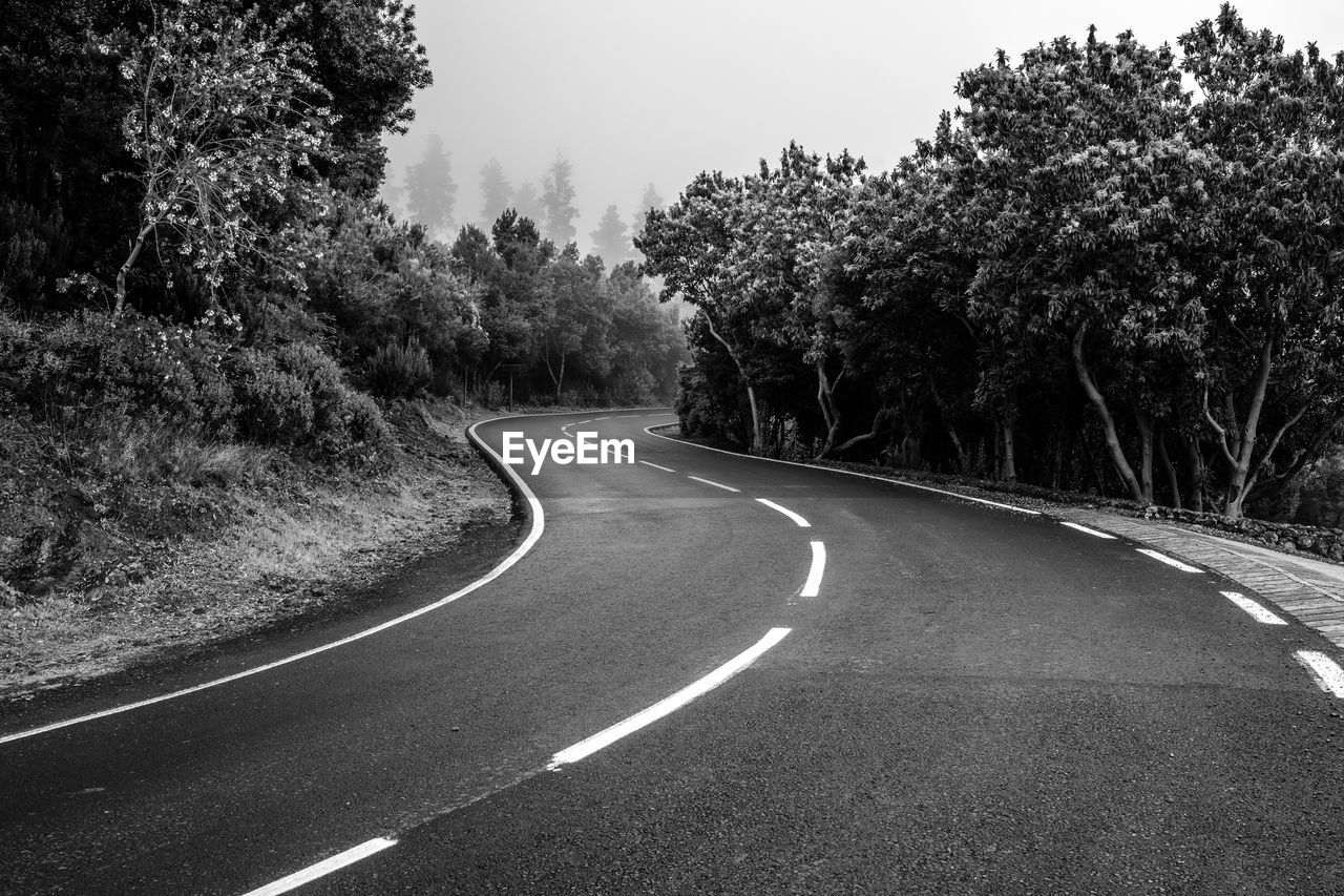 tree, road, plant, direction, transportation, the way forward, nature, no people, curve, growth, day, symbol, sign, marking, tranquility, road marking, sky, outdoors, non-urban scene, diminishing perspective, dividing line, long