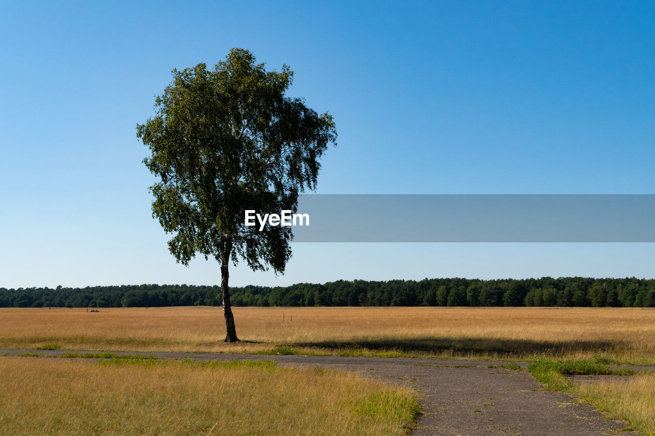 plant, sky, tree, landscape, field, tranquil scene, environment, tranquility, land, growth, beauty in nature, clear sky, nature, scenics - nature, blue, grass, copy space, day, non-urban scene, rural scene, no people, outdoors