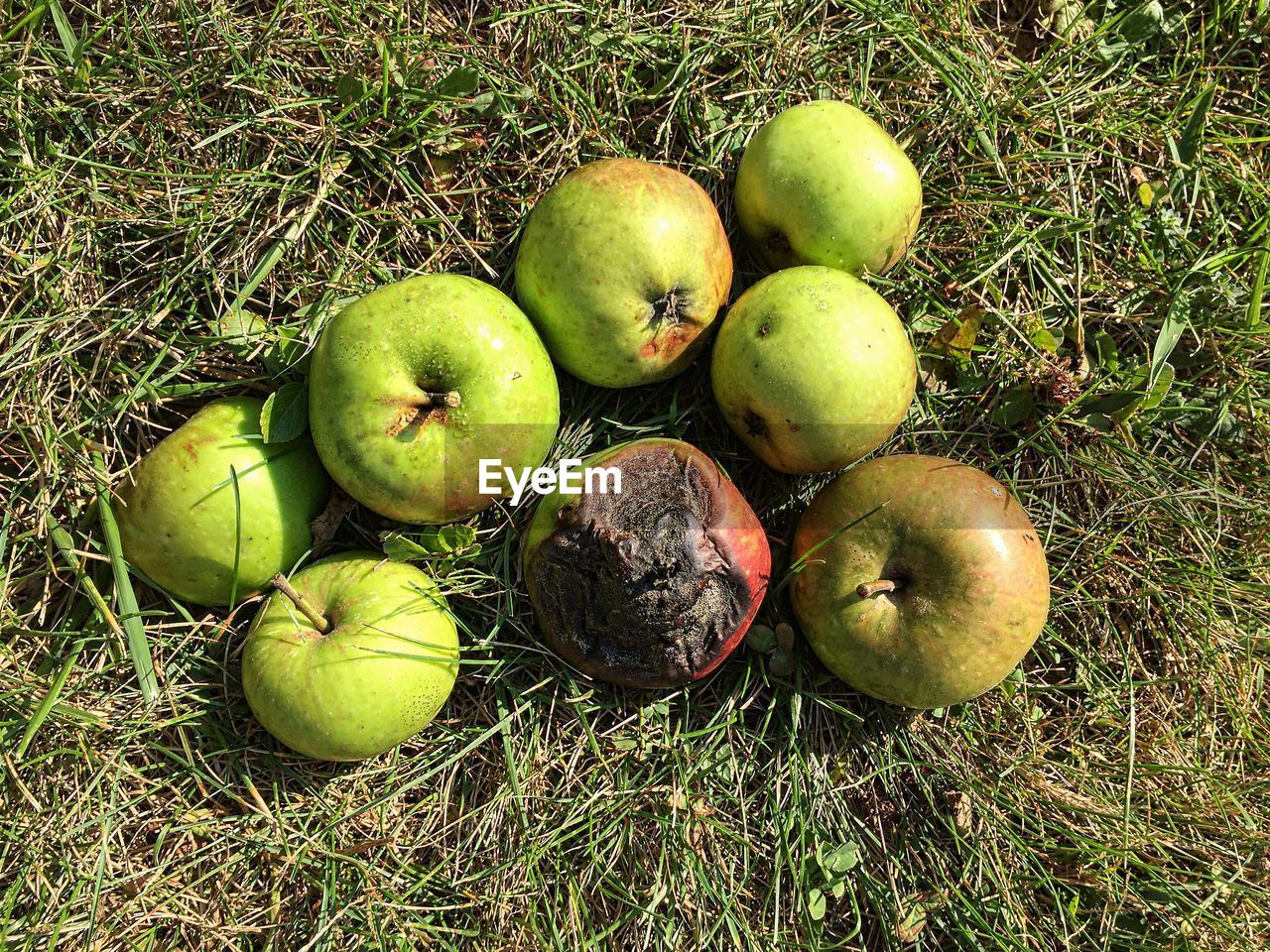 High Angle View Of Granny Smith Apples On Grass