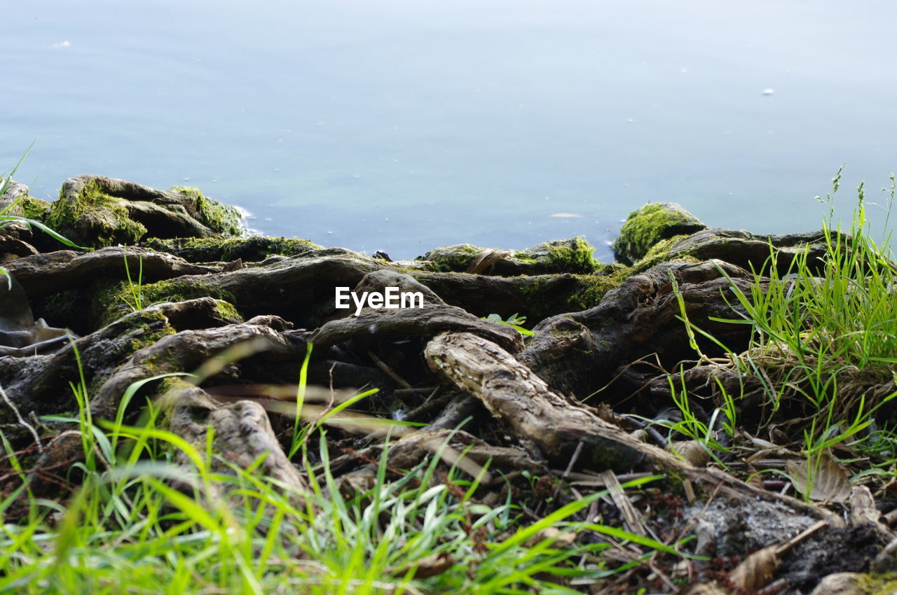 plant, nature, no people, growth, land, rock, tranquility, day, water, beauty in nature, solid, grass, rock - object, sky, sea, green color, scenics - nature, tranquil scene, selective focus, outdoors, surface level