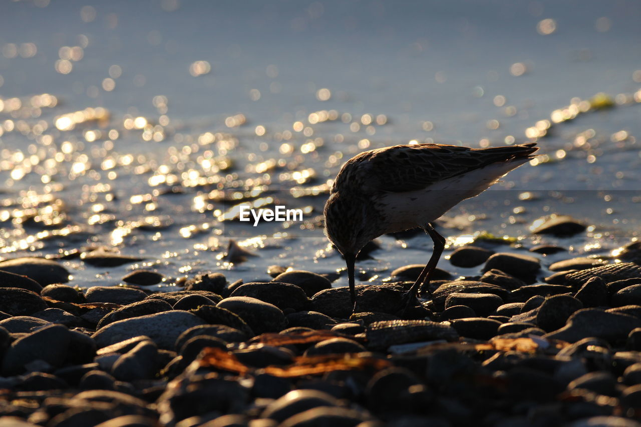 CLOSE-UP OF SEAGULL ON BEACH