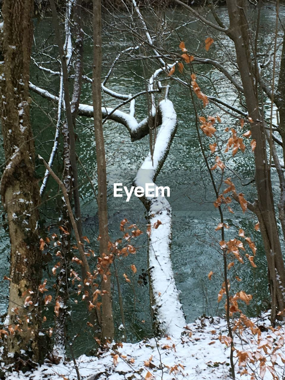 tree, cold temperature, winter, tree trunk, branch, bare tree, snow, nature, no people, outdoors, day, forest, tranquility, frozen, beauty in nature, close-up