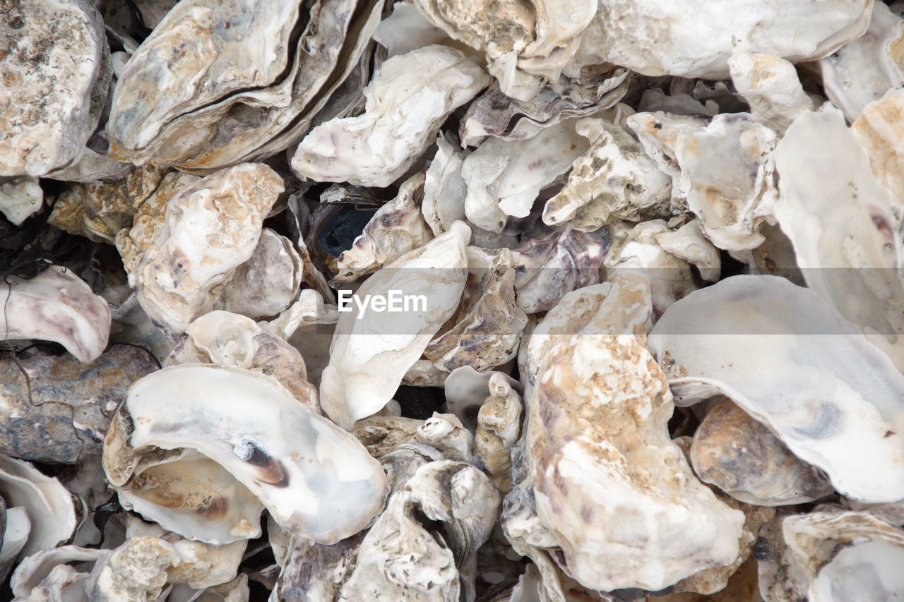 full frame, backgrounds, animal, no people, animal wildlife, seafood, close-up, animal themes, day, shell, large group of objects, high angle view, animals in the wild, nature, animal shell, sea, beach, seashell, outdoors, abundance, marine