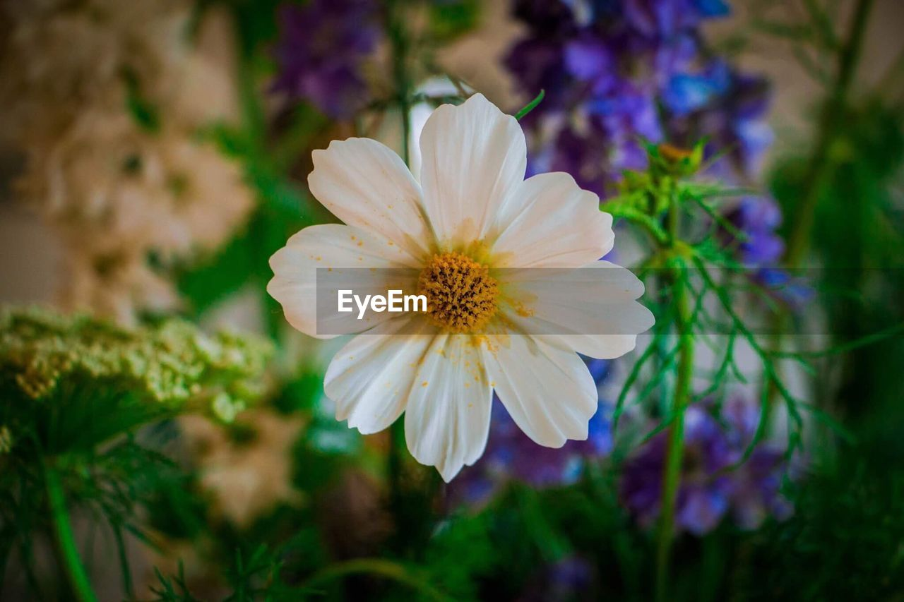 flower, petal, nature, growth, flower head, fragility, blooming, beauty in nature, focus on foreground, freshness, plant, no people, close-up, outdoors, day