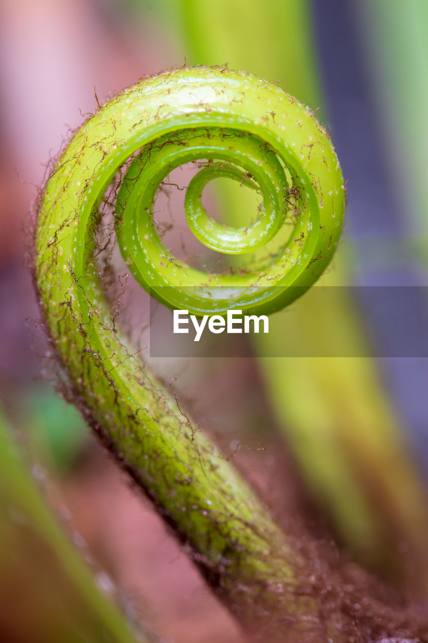 green color, close-up, tendril, no people, plant, spiral, selective focus, beauty in nature, focus on foreground, freshness, nature, growth, vulnerability, fragility, day, curled up, water, fern, outdoors, wet