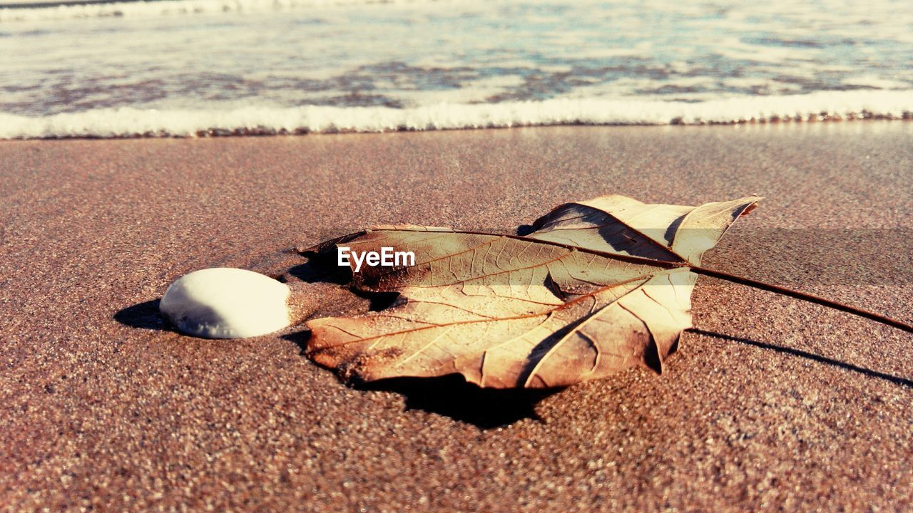 leaf, dry, nature, beach, autumn, change, day, outdoors, sand, close-up, scenics, tranquility, beauty in nature, no people, fragility, water, maple
