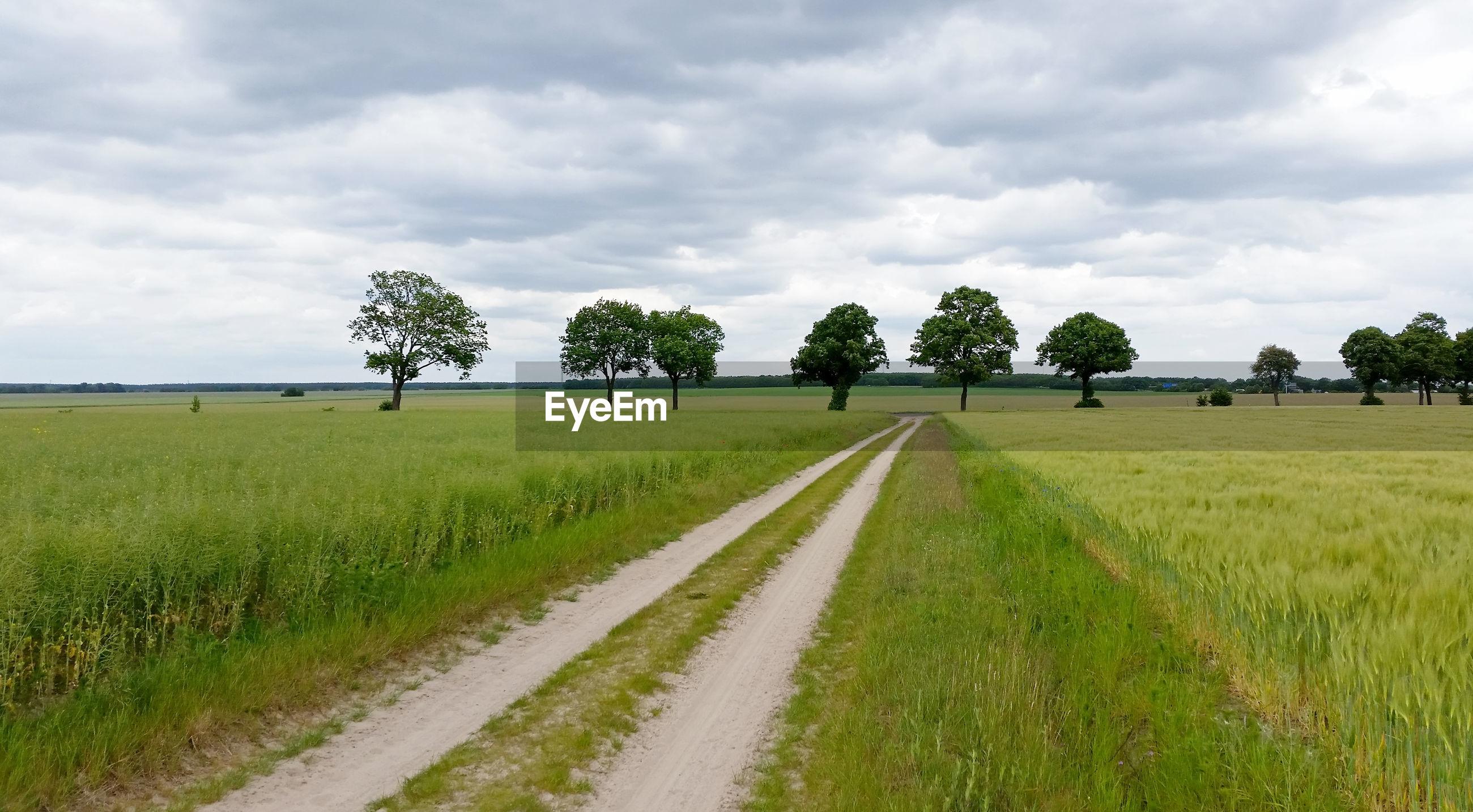 Empty road amidst crops on farm