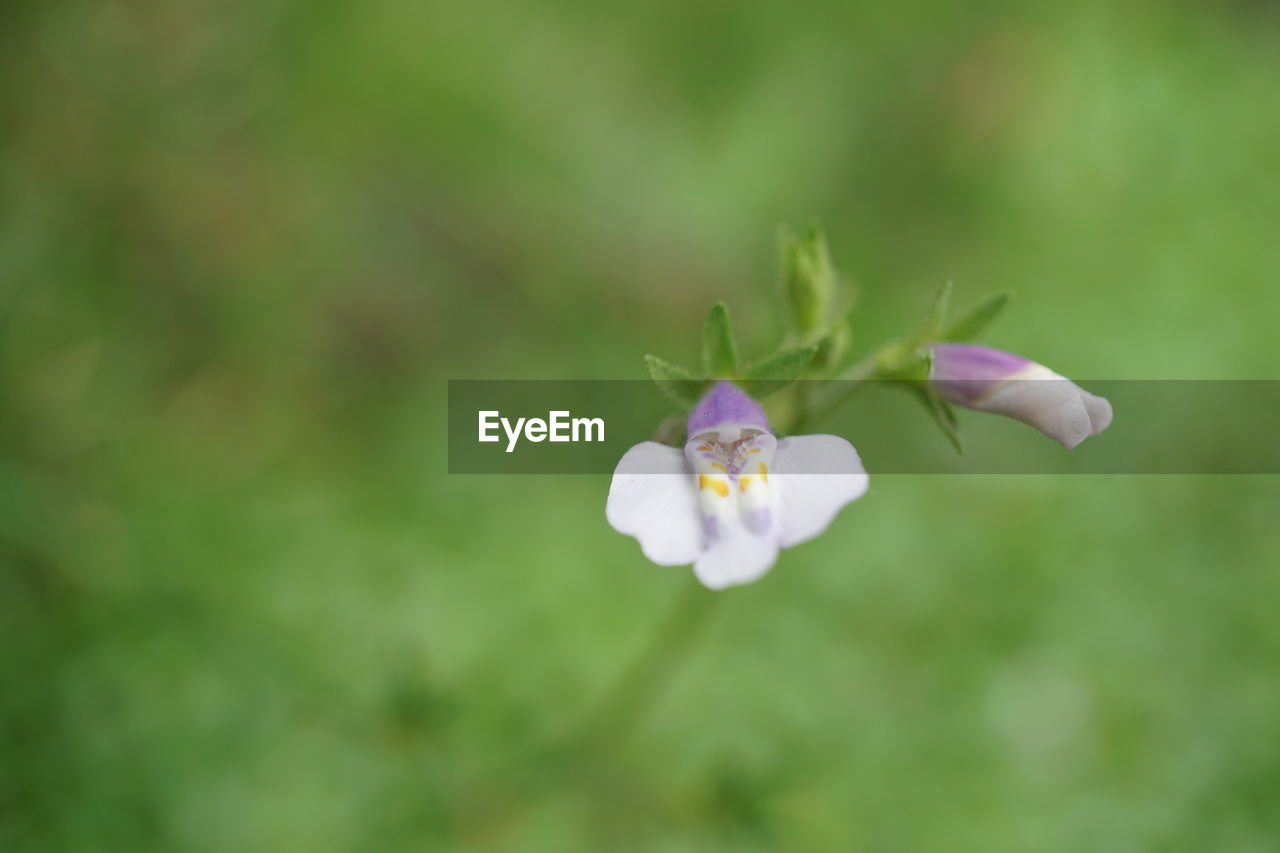 flower, nature, petal, fragility, beauty in nature, white color, flower head, plant, freshness, growth, day, green color, no people, outdoors, close-up, blooming, animal themes