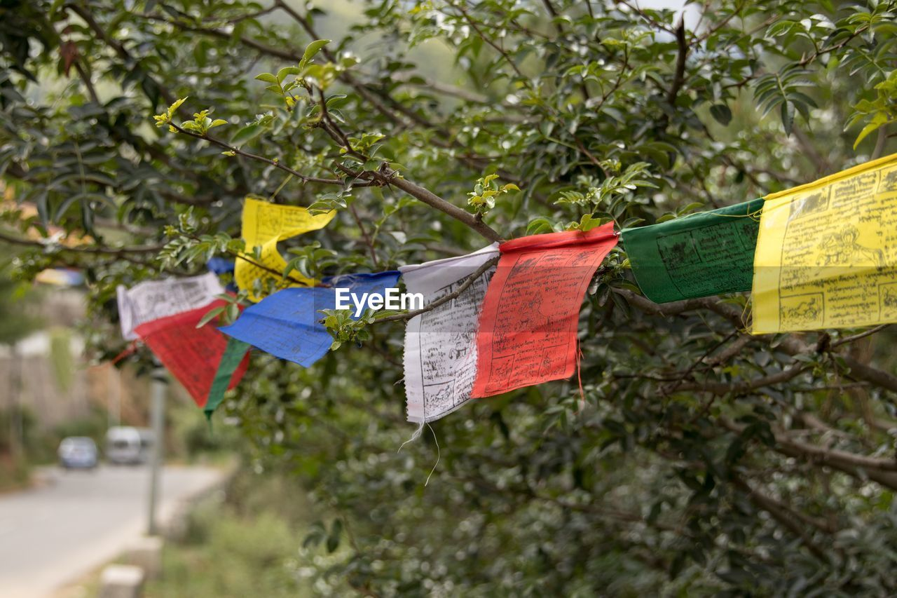 hanging, tree, plant, flag, nature, communication, no people, day, text, outdoors, focus on foreground, clothesline, growth, multi colored, close-up, religion, celebration, belief