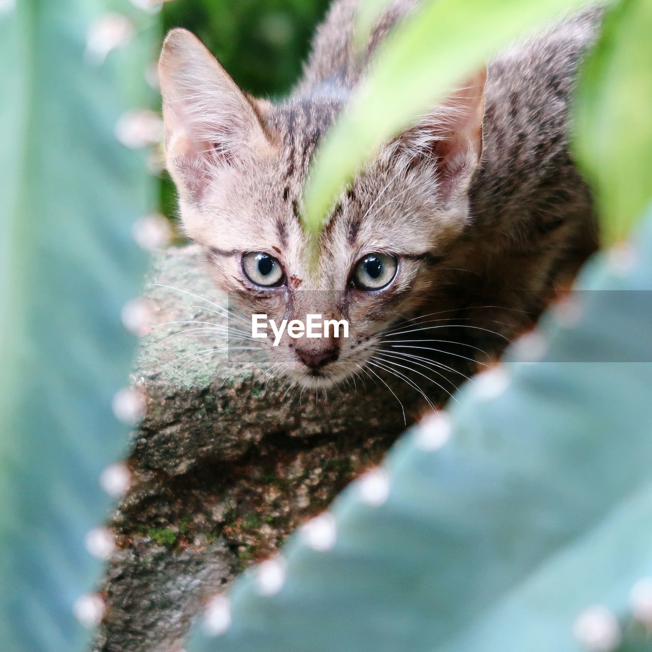 one animal, animal themes, animal, mammal, feline, selective focus, domestic animals, pets, looking at camera, cat, vertebrate, domestic, domestic cat, portrait, close-up, whisker, young animal, no people, tree, day, kitten, animal head