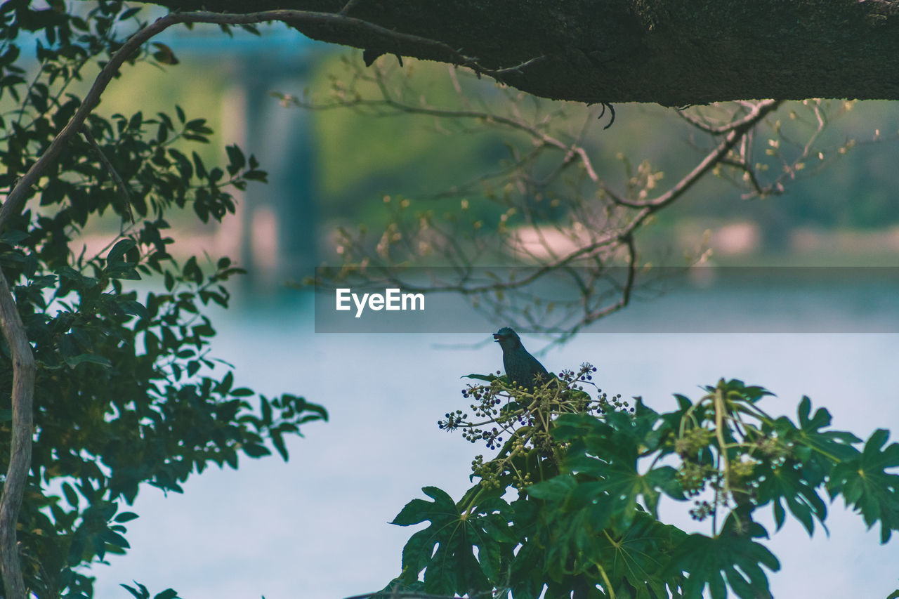 plant, plant part, growth, leaf, water, nature, tree, focus on foreground, beauty in nature, day, no people, green color, animals in the wild, close-up, tranquility, branch, animal wildlife, outdoors, lake