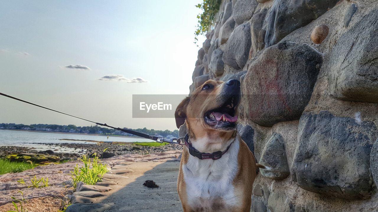 Close-up of dog by stone wall against sky