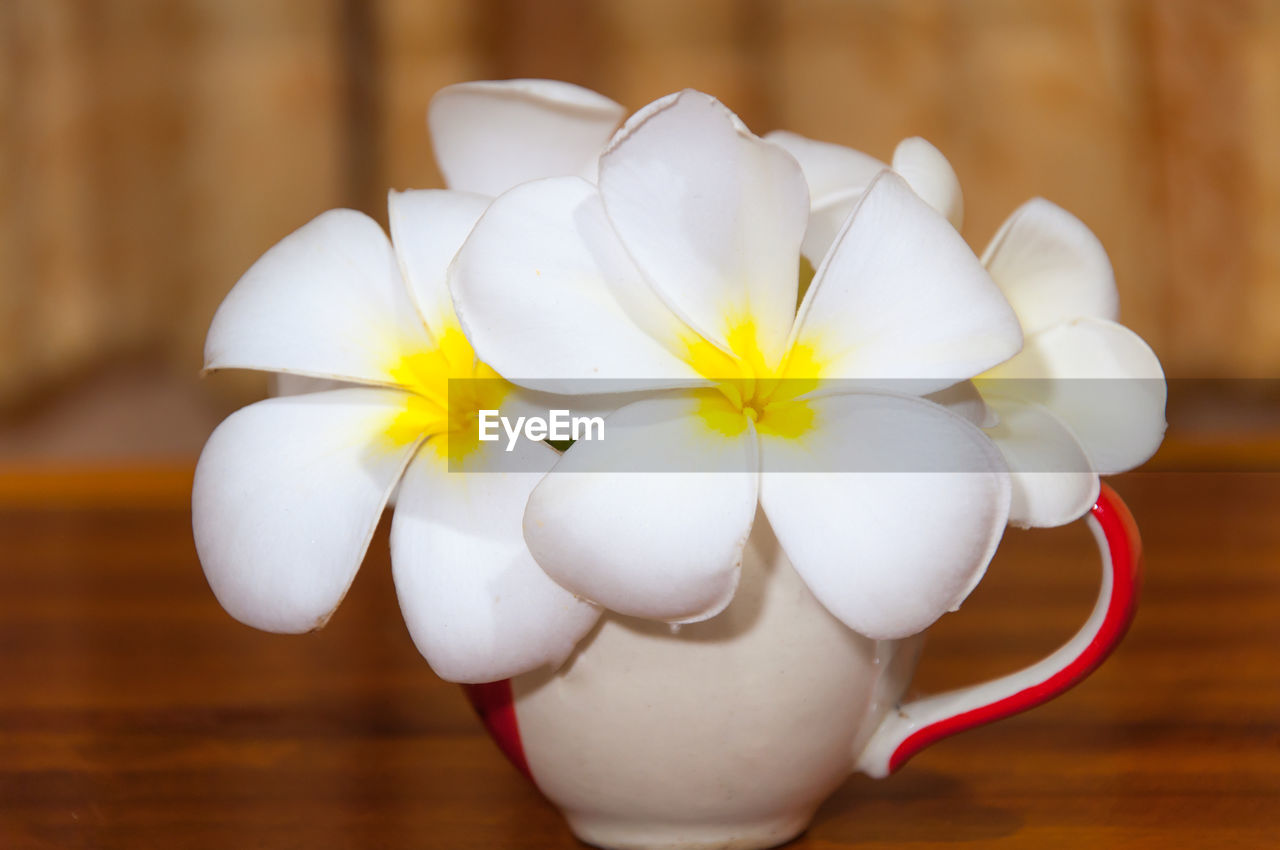 white color, flower, plant, flowering plant, table, close-up, indoors, freshness, beauty in nature, focus on foreground, fragility, no people, vulnerability, petal, wood - material, inflorescence, flower head, nature, still life