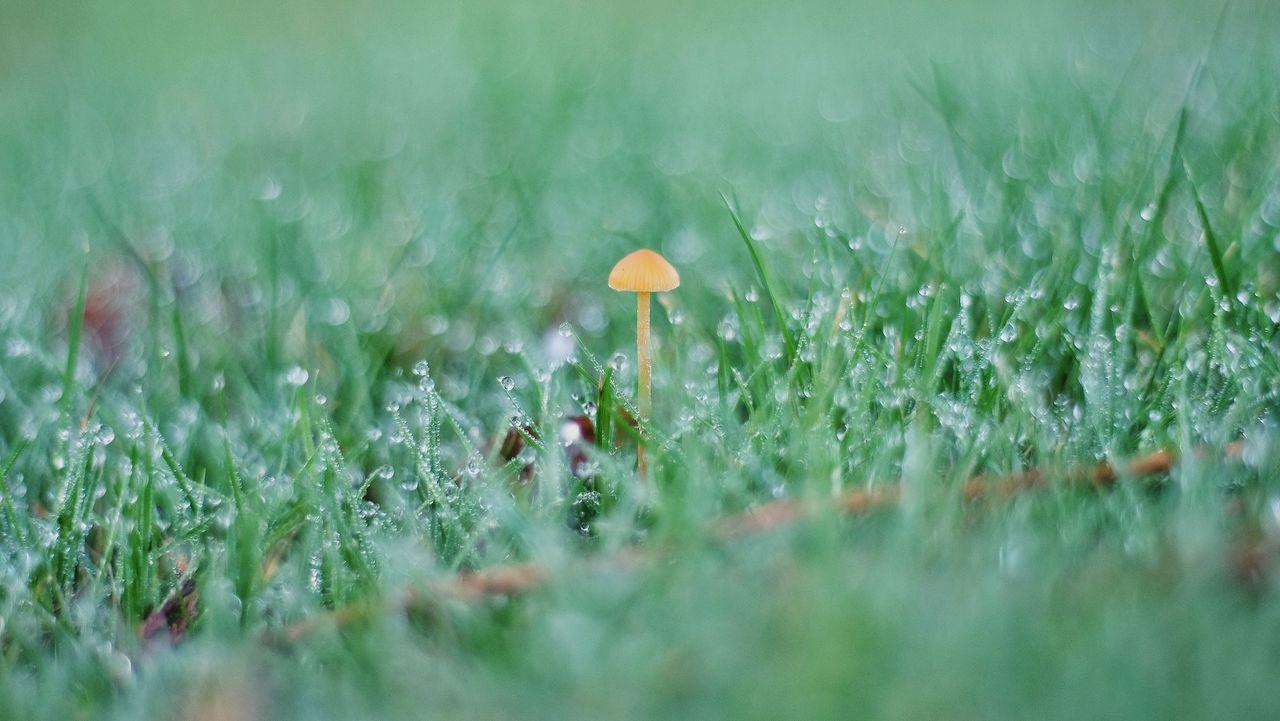 Close-up of mushroom on grassy field