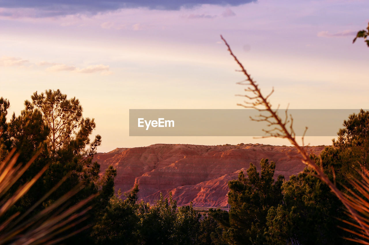 sky, plant, mountain, cloud - sky, beauty in nature, tree, scenics - nature, tranquil scene, tranquility, nature, environment, no people, landscape, growth, non-urban scene, sunset, mountain range, idyllic, outdoors, day, mountain peak