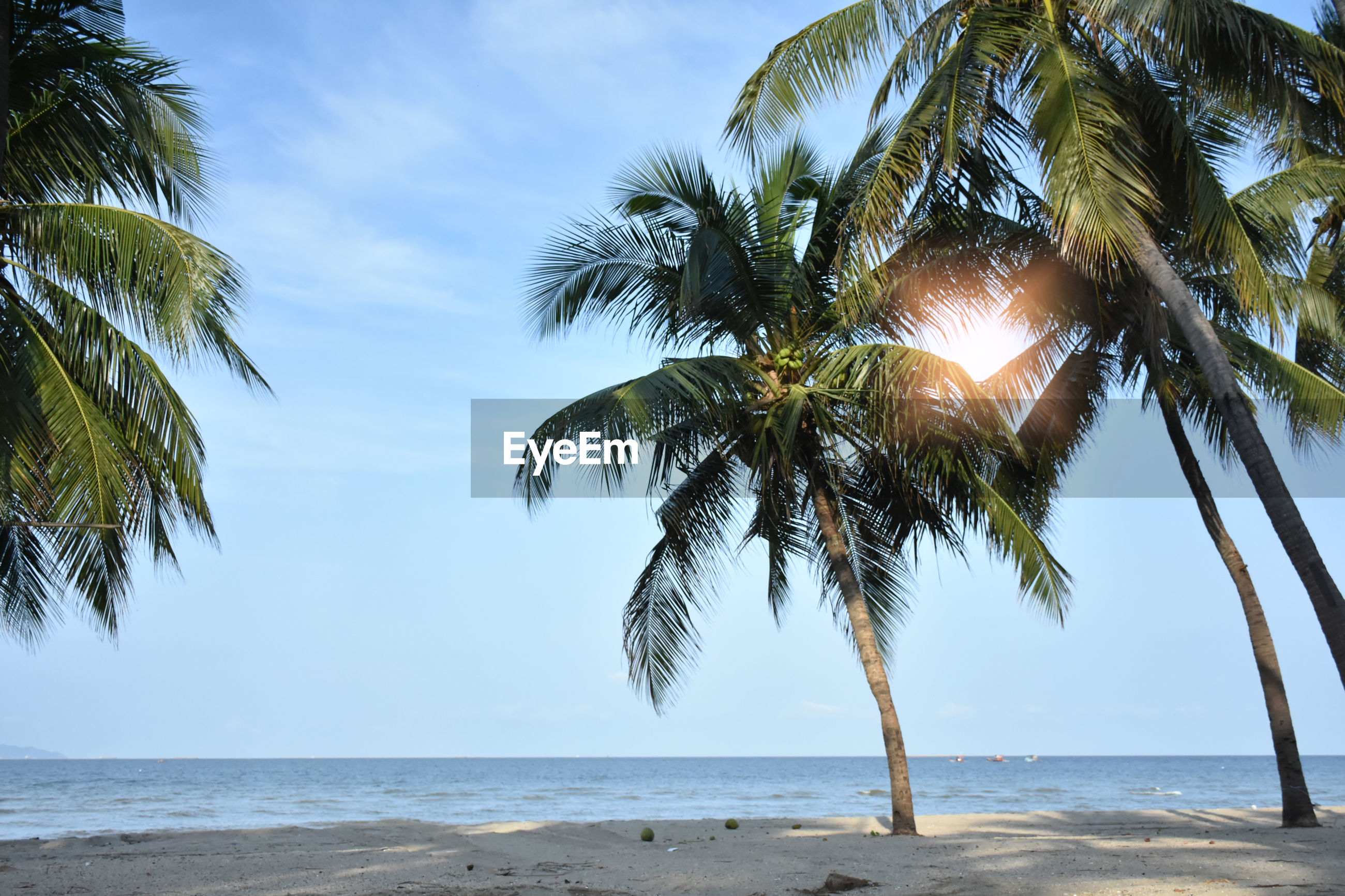 Sunshine light in morning time though palm trees on beach against sky
