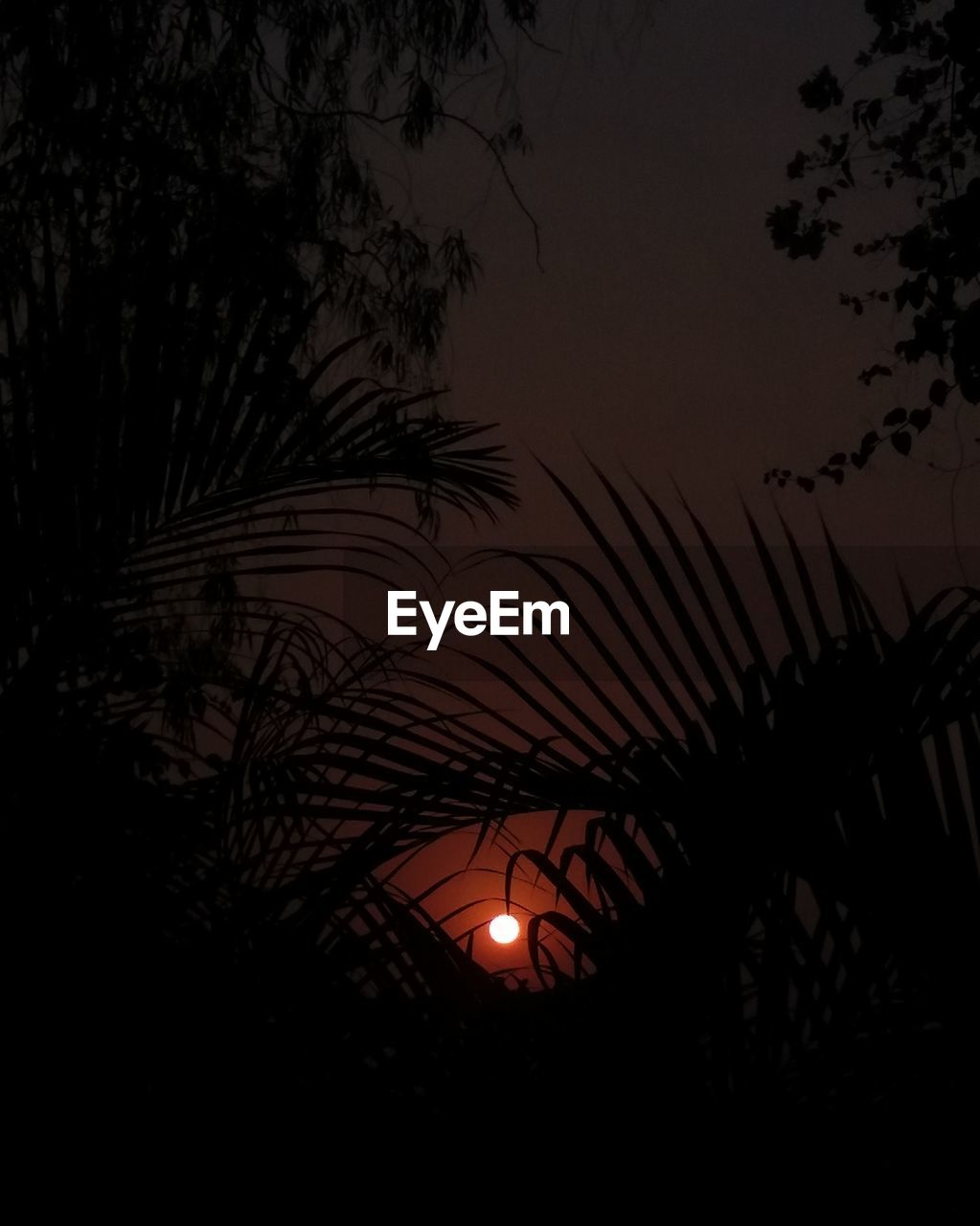 sunset, moon, night, silhouette, low angle view, beauty in nature, nature, tree, growth, scenics, no people, outdoors, tranquility, sky