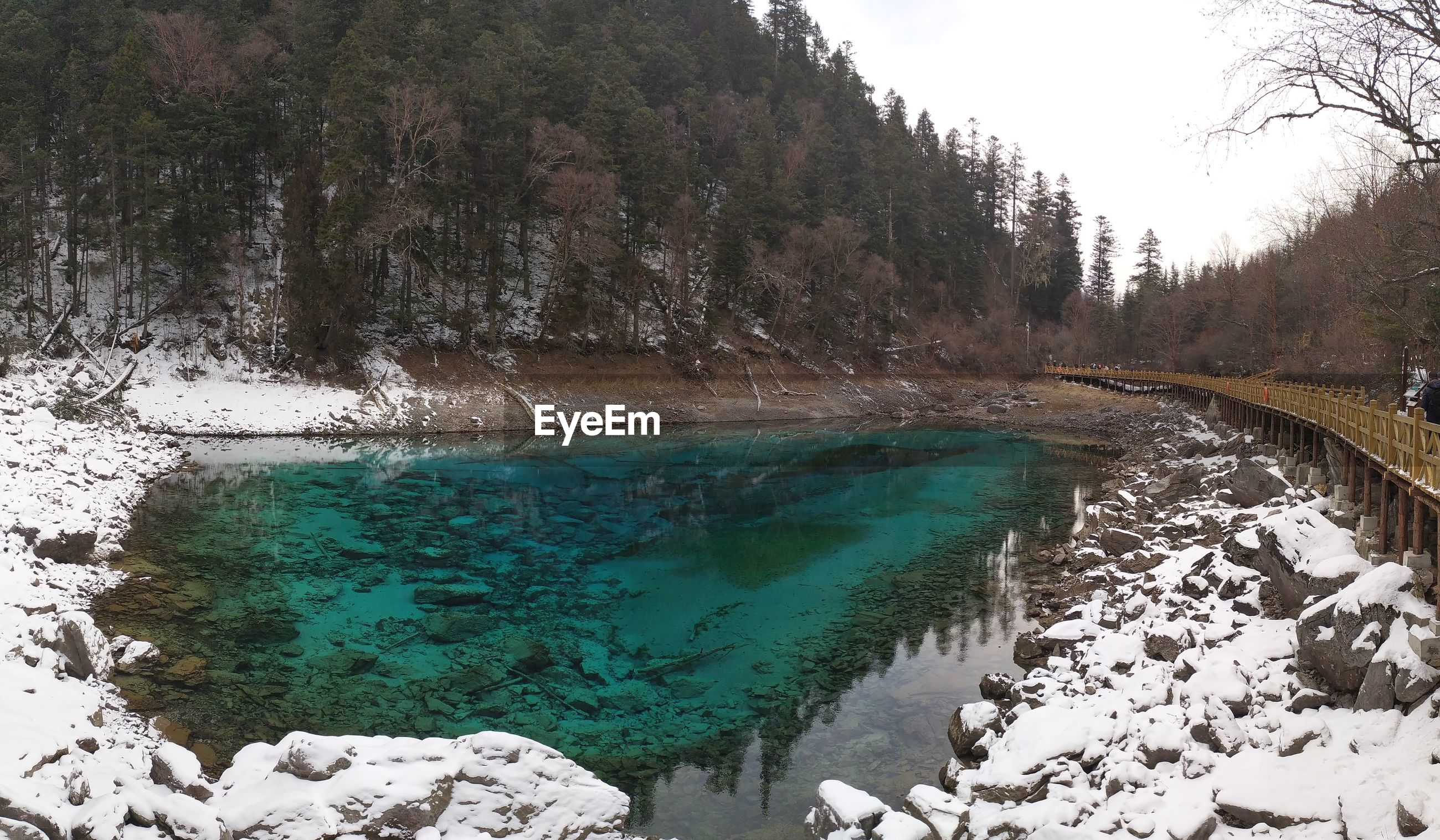 Scenic view of lake amidst trees during winter