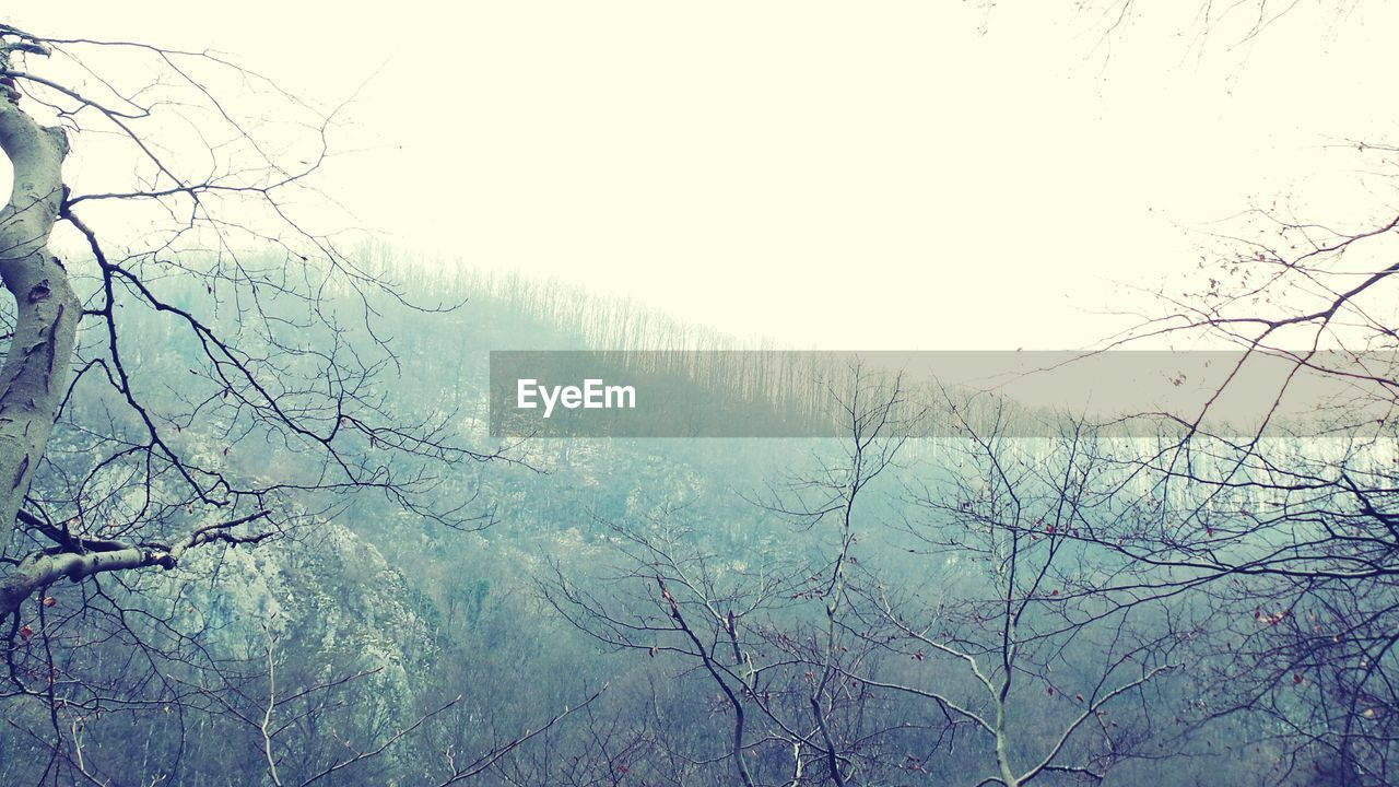 nature, beauty in nature, tree, fog, no people, branch, tranquil scene, day, tranquility, landscape, scenics, bare tree, outdoors, sky