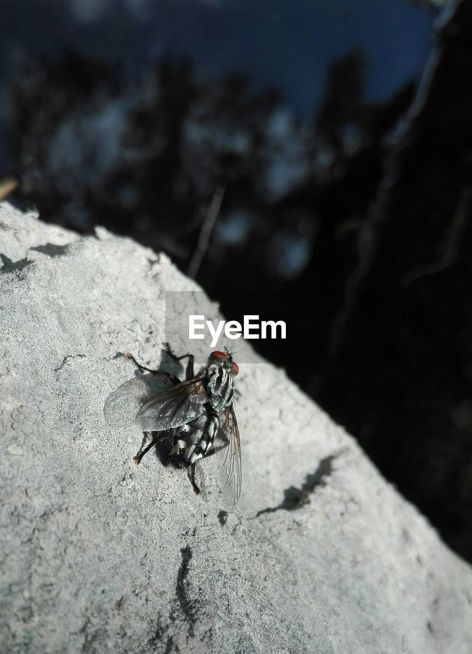 animal themes, animals in the wild, animal wildlife, animal, invertebrate, insect, one animal, fly, animal wing, close-up, housefly, day, rock, no people, rock - object, solid, nature, focus on foreground, selective focus, black color, outdoors, marine
